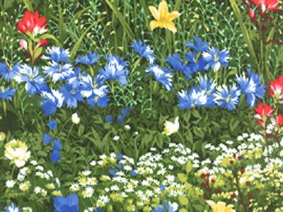 Wildflowers-VII1